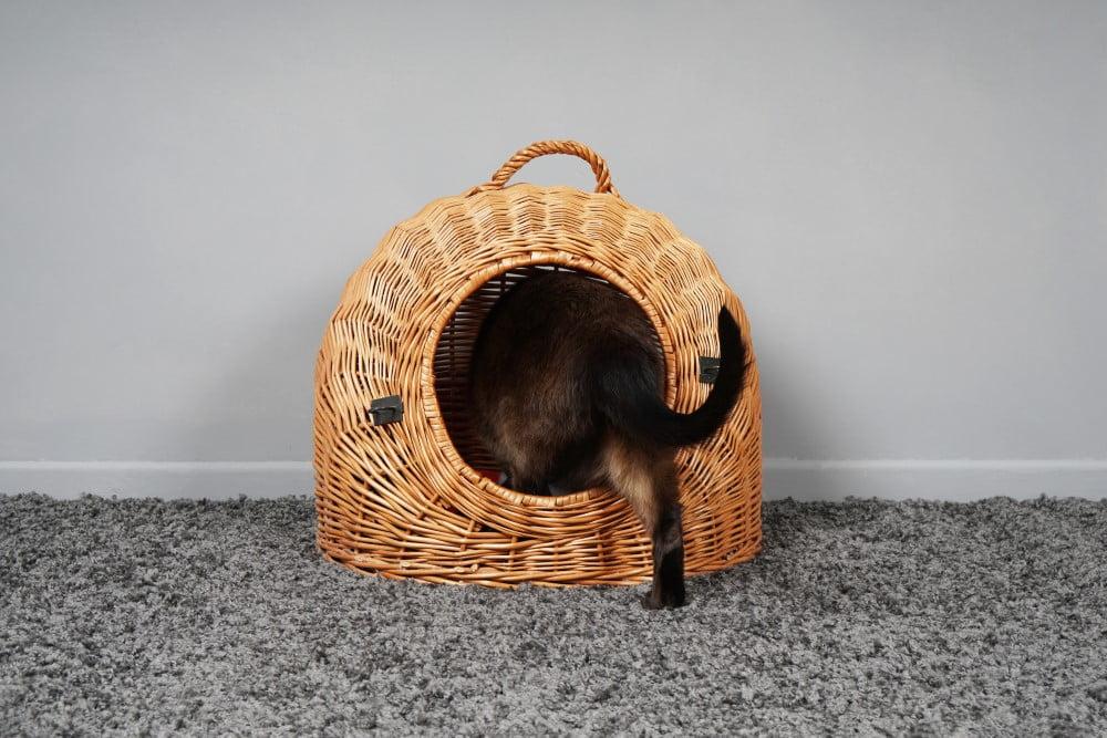 Kattehule